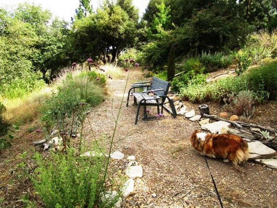 An area to spiff up between the cultivated or watered garden and the natural meadow. We sit here often to look at our view of the mountain.