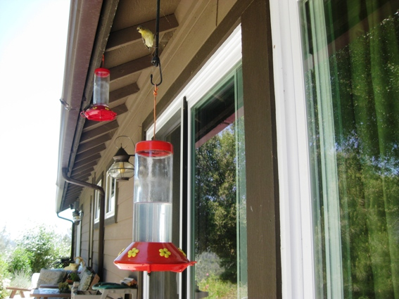 Hummingbirds feeders