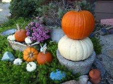 Decorating with colorful pumpkins