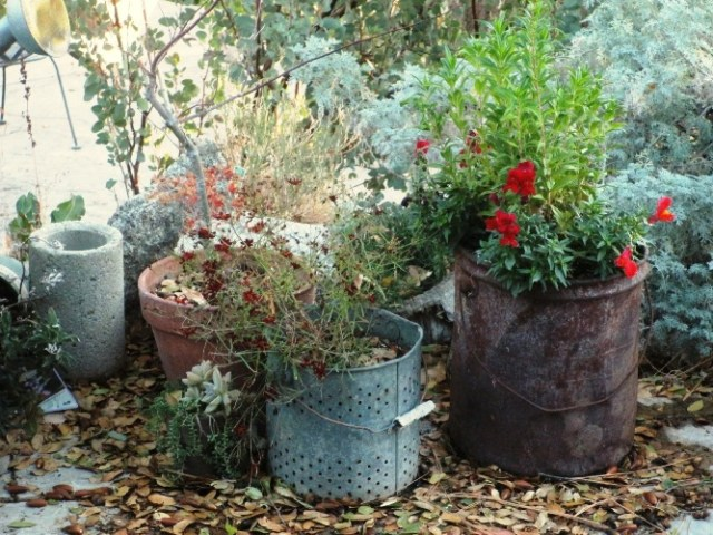 Remove faded flowers and fill pots with gravel or mulch
