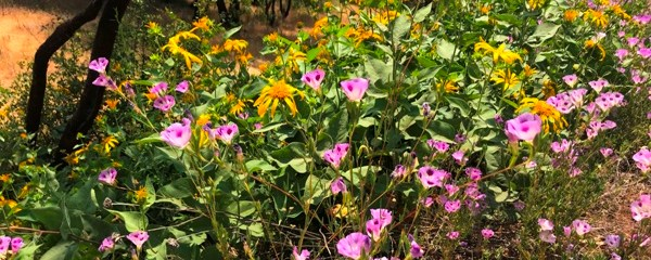 Sierra Foothill Garden | A New Mountain Gardener in the Central ...