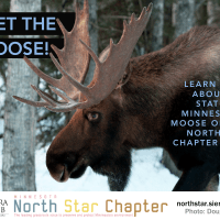 North Star Critter Spotlight: Moose