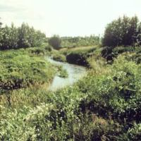 Riparian Buffers: A Boost to Clean Water