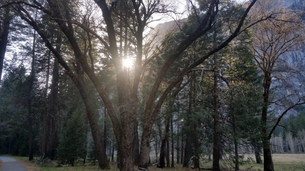 Mono wind Event Devastates Yosemite National Park