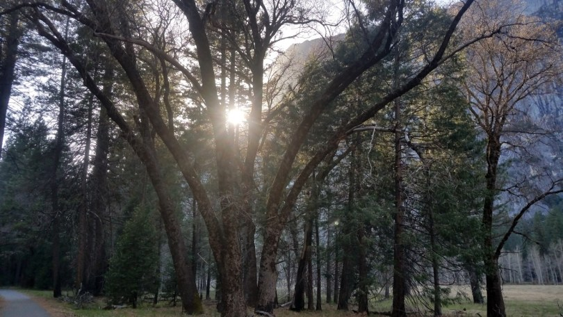 Yosemite Valley Sunlight Through the trees