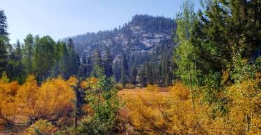 Scott Lake trail Meadow