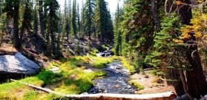 kings creek lassen