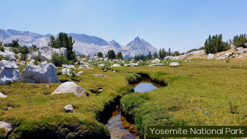 High Alpine Meadow in Yosemite National Park North of Ragged Peak