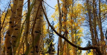 cropped-fall-colors-alpine-county-2021-10-09-13.59.11.jpg