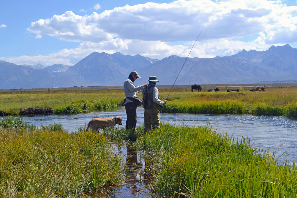 Fly fishing guide bishop and mammoth sierra trout magnet for Bishop creek fishing