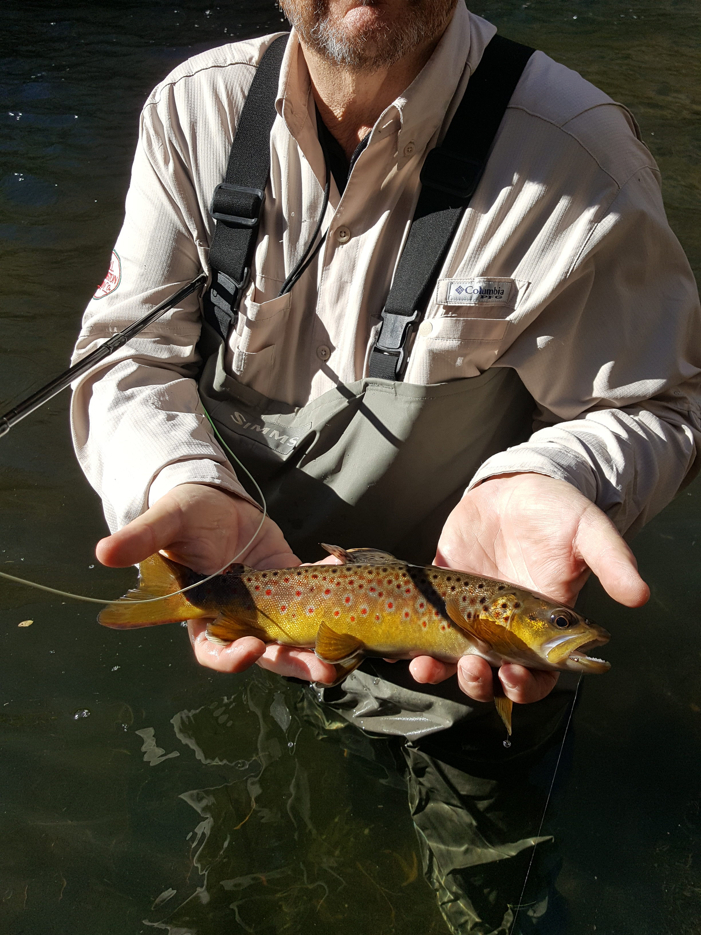 Lower owens river fly fishing bishop ca report for Bishop ca fishing