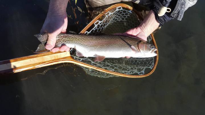 Large Crowley Trout caught on Perch Fry imitations