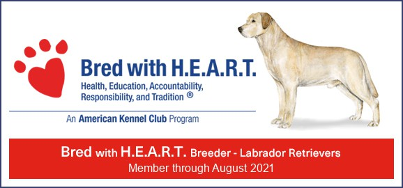 AKC Bred with heart logo sierra valley labs