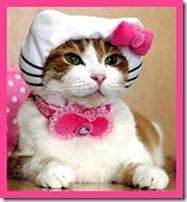 Pet Contest 2012[1]