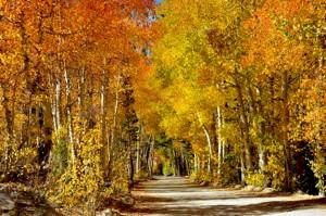 North Lake Road.  Photo by Jared Smith