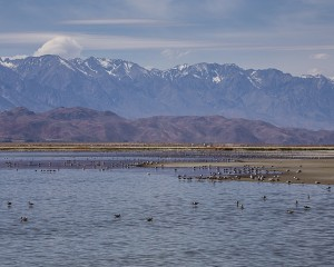A flood control pond on the Owens Lake hosts birds and creates a scenic landscape, thanks to the Sierra in the background. Photo by Robin Black
