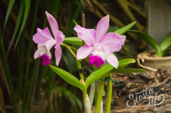 Лоро-парк: цветок орхидея