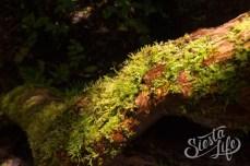 Анага: на территории парка встречается более двух десятков растений эндемиков