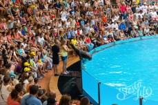 Лоро-парк — общение морского котика и посетительницы парка