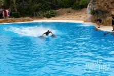 Лоро-парк: дельфины и дрессировщик