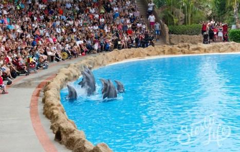 Лоро-парк: шоу дельфинов