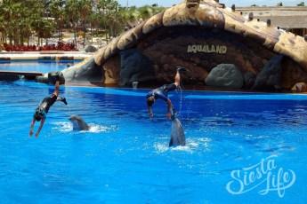 Шоу дельфинов в Акваленде на Тенерифе