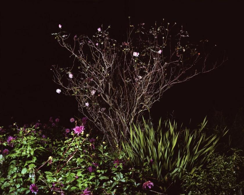 "Imagen de la serie ""Boas Noites"""
