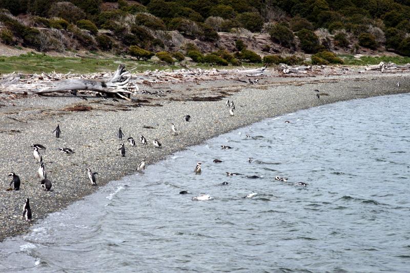 Siga na Viagem - Passeio pelo Canal de Beagle em Ushuaia - Ilha Martillo.