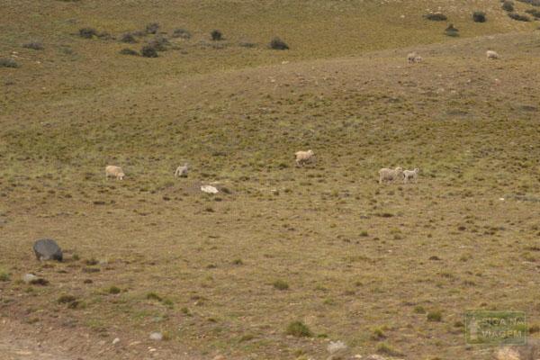 Siga na Viagem - Tour no Parque Nacional Torres Del Paine - Animais