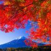 紅葉の世界遺産を調査!日本が誇る画像と見どころ一覧をまとめた!