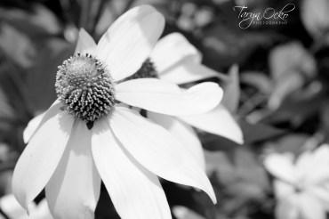 © Taryn Ocko Photography