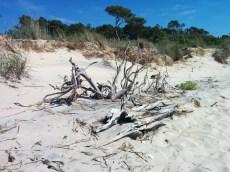 savage neck beach 2