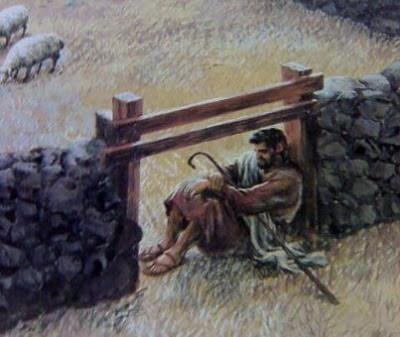 The Sheep Fold