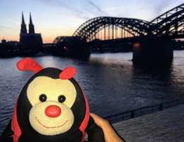 Cologne: Travel Bug's 3 Fascinating Facts about Cologne