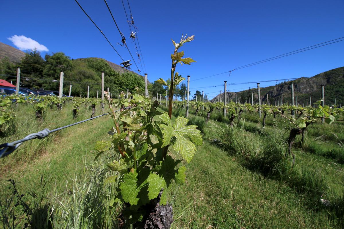 Best Pinot Noir 2021 Pinot Noir NZ 2021 set for Christchurch in February 2021