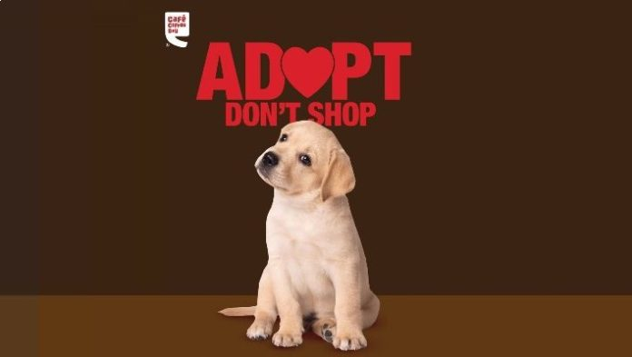 Valentine's Day: Café Coffee Day is organizing pet adoption drive in Bengaluru