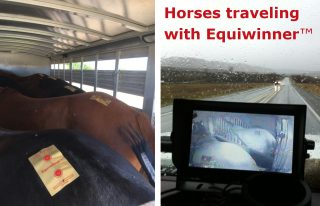Horse transportation made easier with Equiwinner patches.