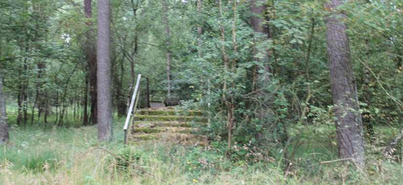 Staircases in the woods