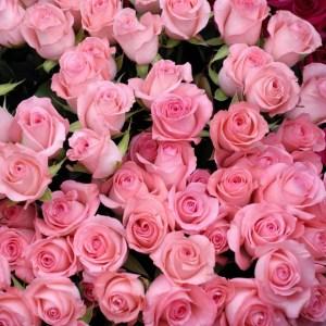 rosa femenino