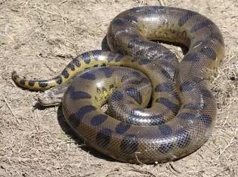 que-significa-soñar-serpiente-anaconda