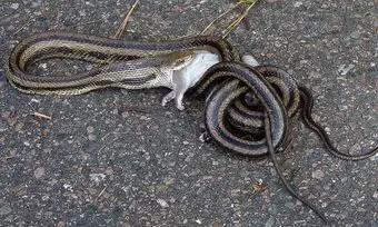 que-significa-sonar-con-serpiente-se-come-presa