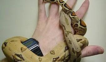 que-significa-sonar-con-serpientes-me-muerde-las-manos