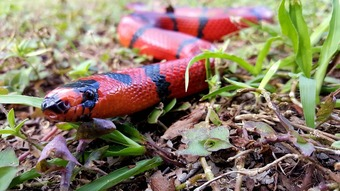 que-significa-sonar-con-serpiente-roja