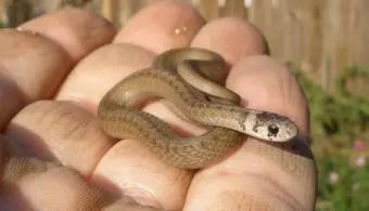 que-significa-sonar-con-serpiente-pequenas-chicas