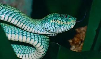 Que significa so ar con serpiente color turquesa los for Que color asociar con el azul turquesa
