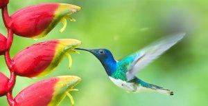 9 Mensagens Da Vida Que Os Beija-flores Nos Ensinam