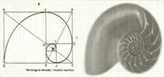 espiral-nautilus