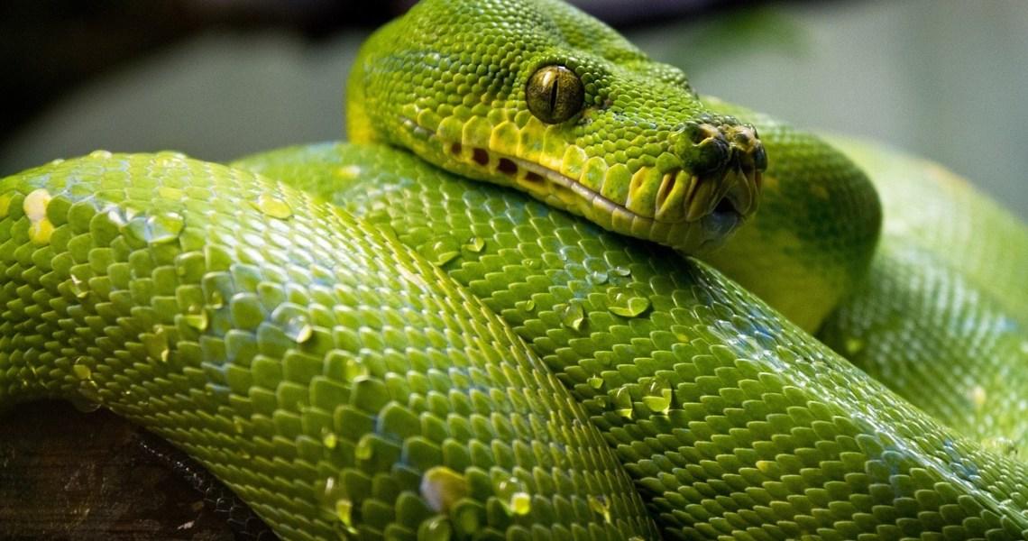 Significado de Soñar con una Serpiente