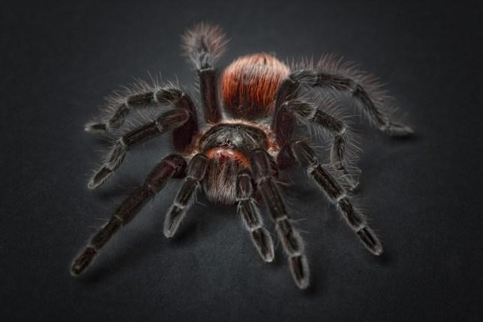 ¿Cuáles el significado de soñar con arañas?