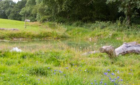 wildlife-pond (1).jpg